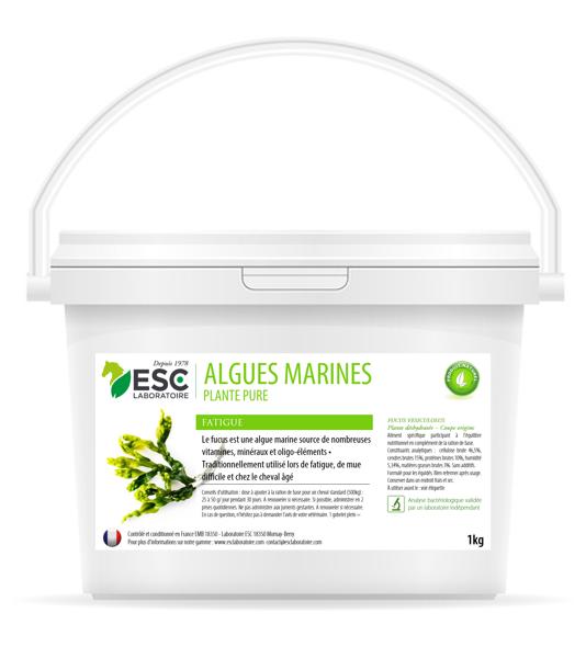 Algues Marines – Fatigue et baisse de forme